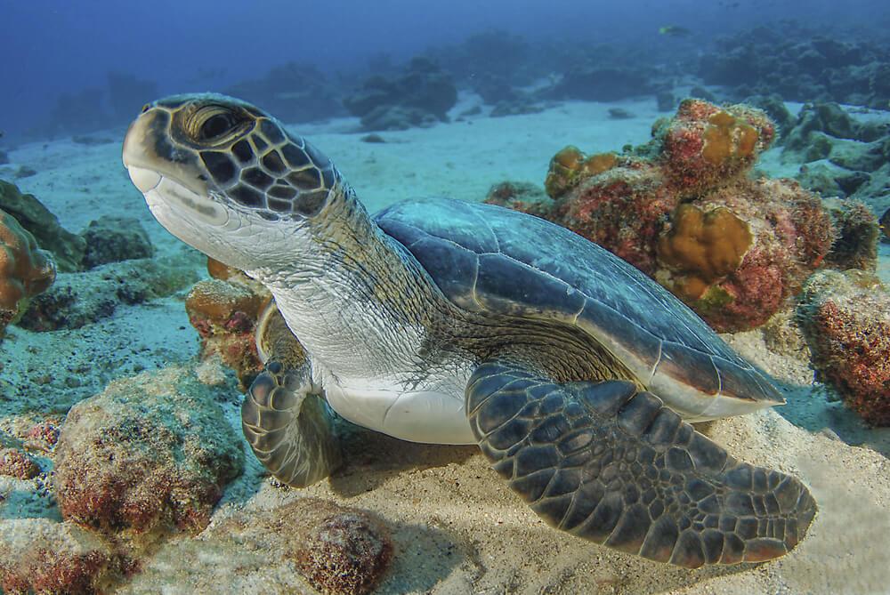 tartaruga na costa rica