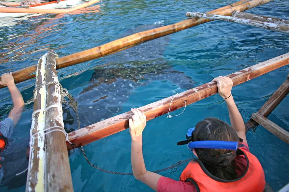 tubaroes baleia nas filipinas