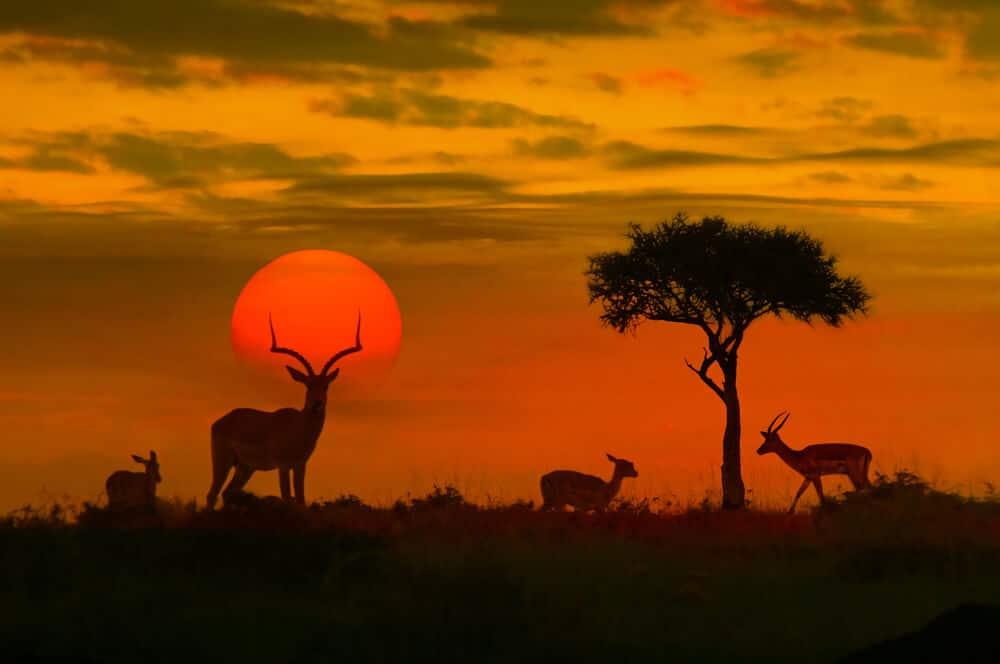viagem africa sul parque kruger