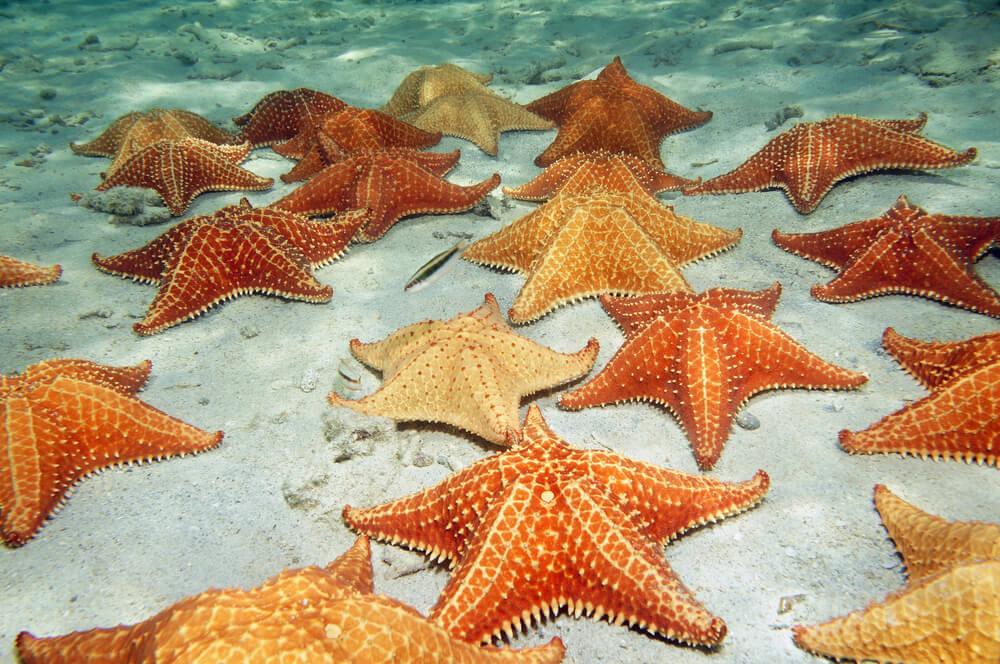estrelas do mar laranja submersas
