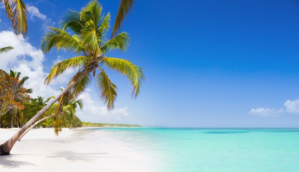 palmeira numa praia tropical deserta