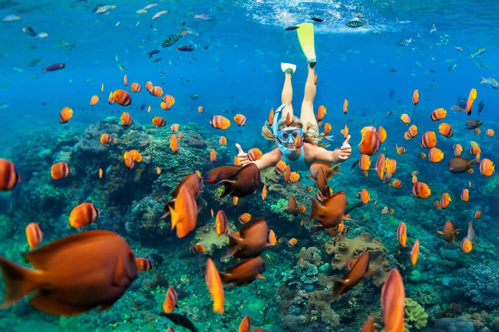 mulher a fazer snorkeling com peixes laranjas