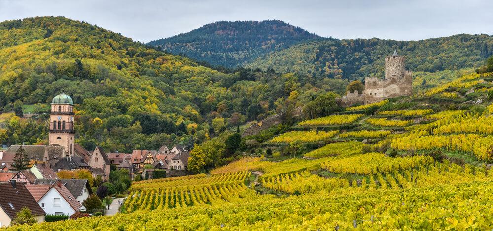panoramica das vinhas da rota dos vinhos na alsacia