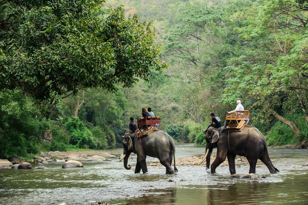 passeio de elefante pela selva indonesia