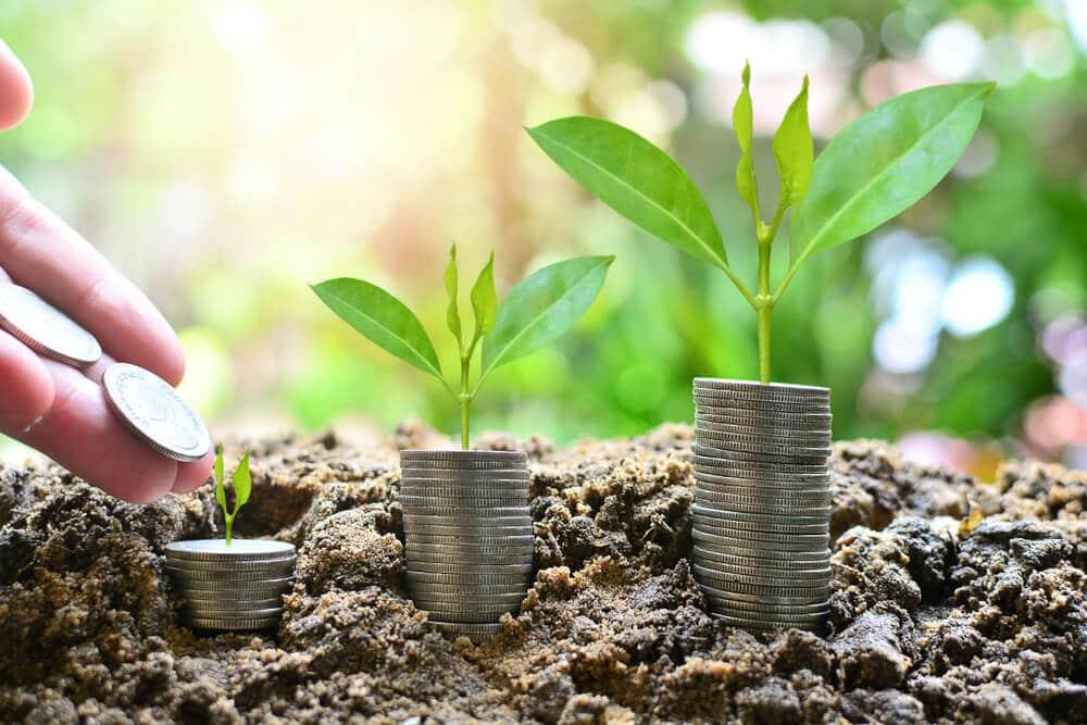 plantas em crescimento e moedas