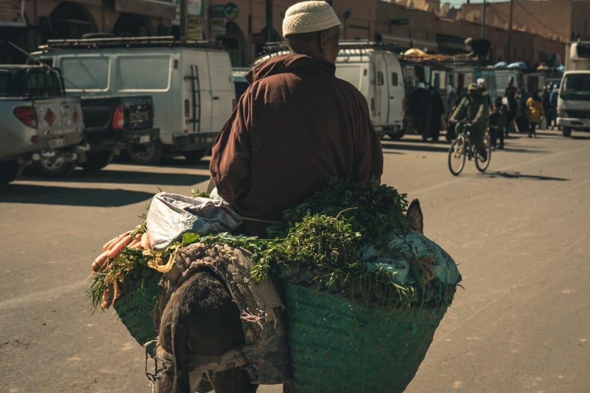burro carregada no mercado de rissani