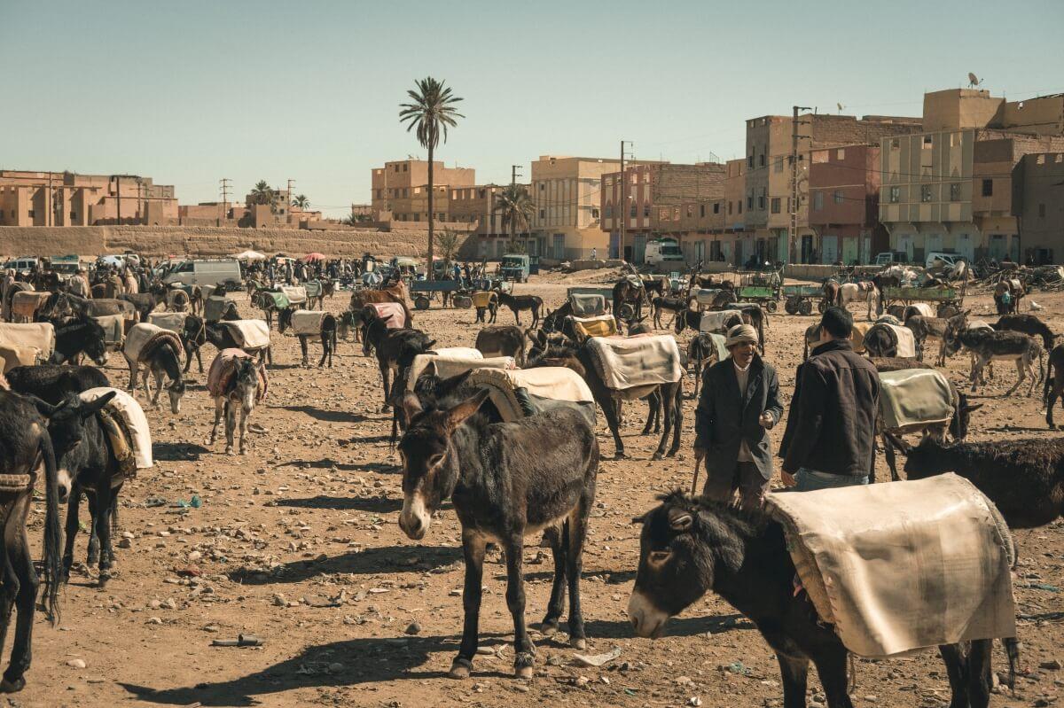 estacionamento para burros no mercado de rissani