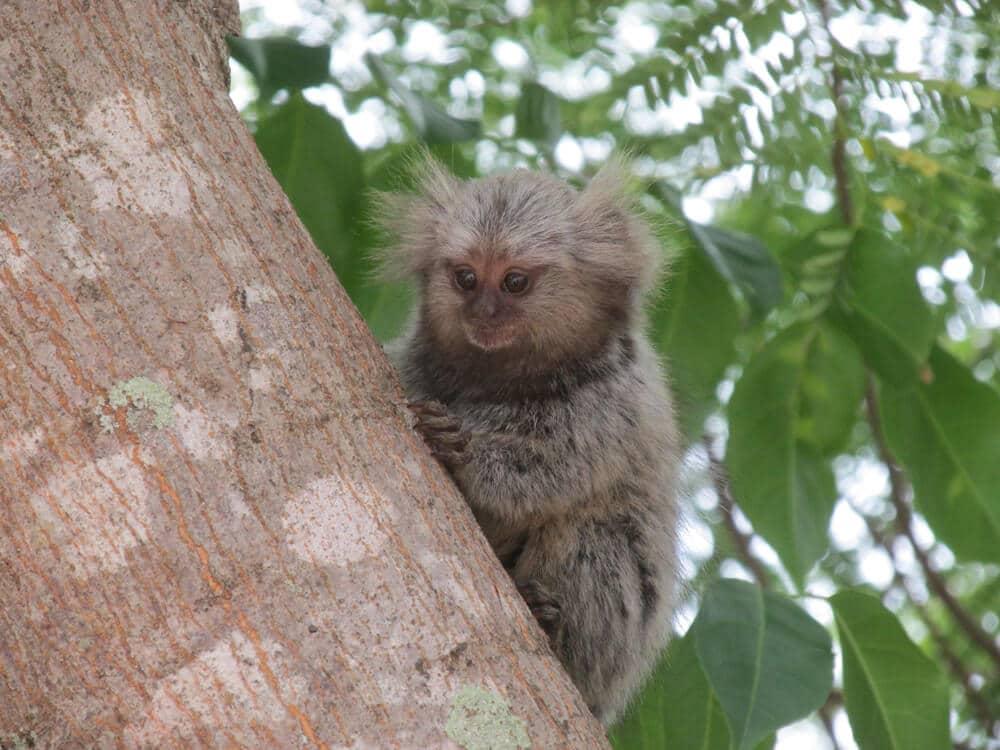 macaco pequeno no tronco de uma arvore