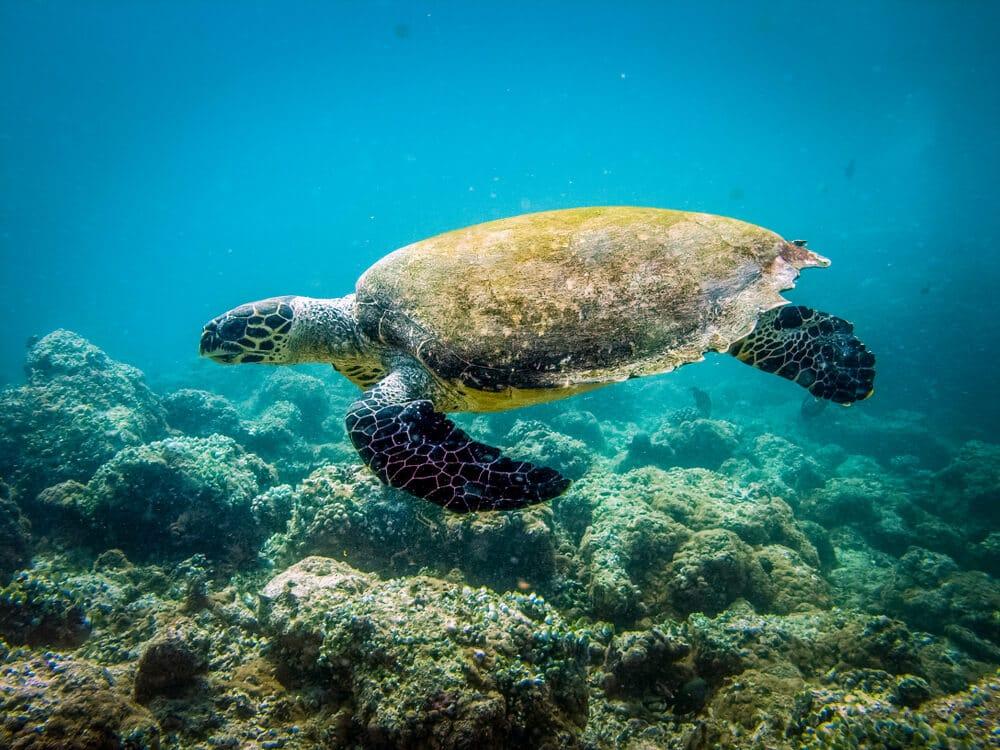 tartaruga marinha a nadar no mar