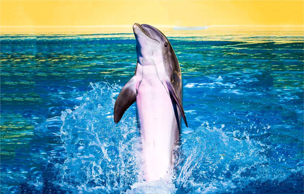 golfinho numa piscina com fundo amarelo
