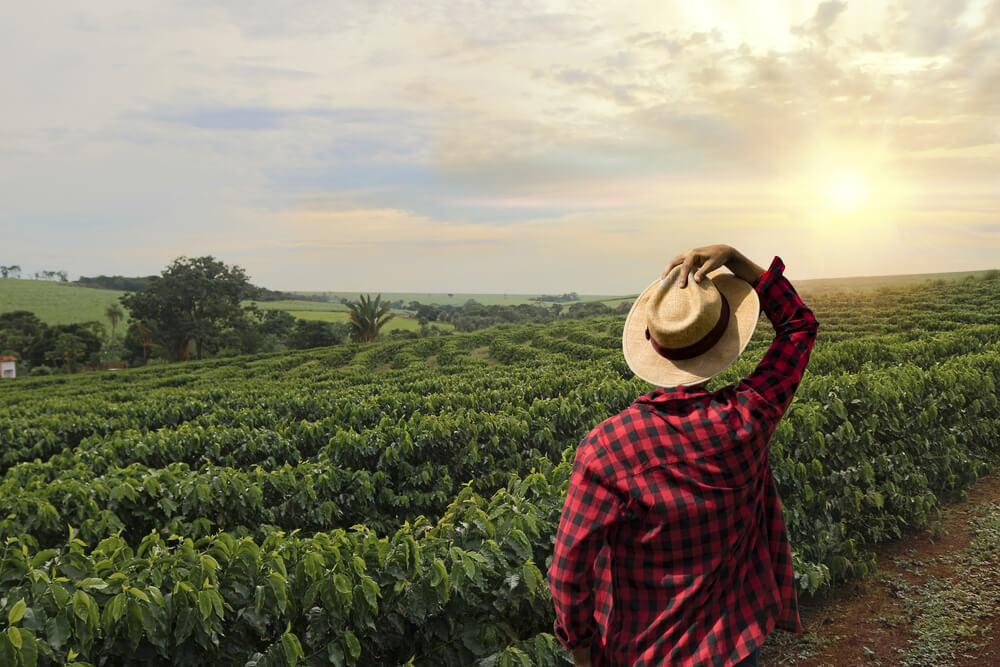 rapaz segura chapeu de palha enquanto olha para um campo