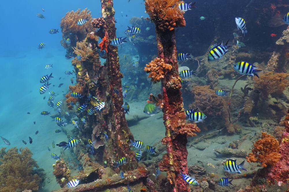 peixes nadam no meio de um navio naufragado