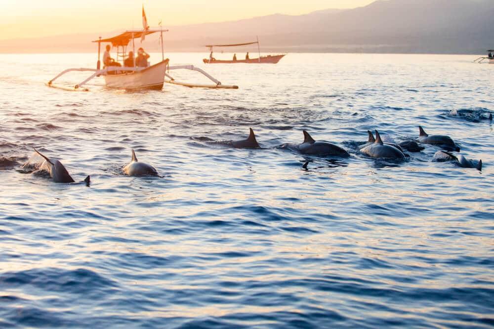 avistamento de golfinhos como atividade turistica a não perder