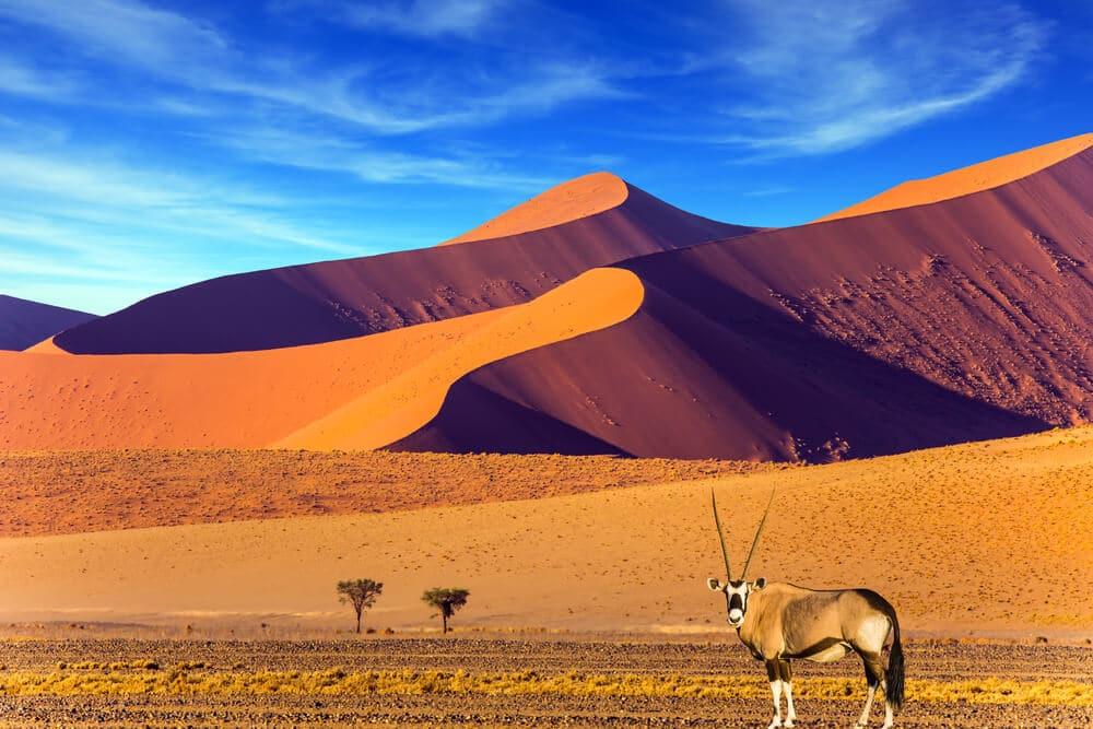 antilope no deserto da namibia