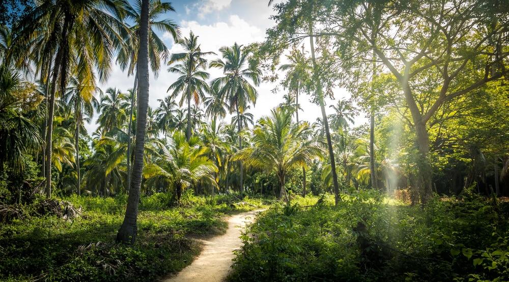 palmeiras do parque natural de tayrona